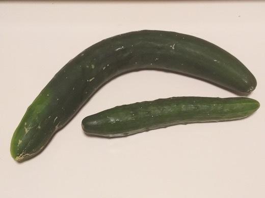 cucumber-6.jpg