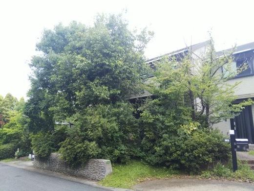 pruning-4.jpg