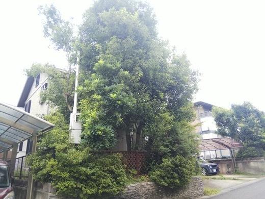 pruning-5.jpg