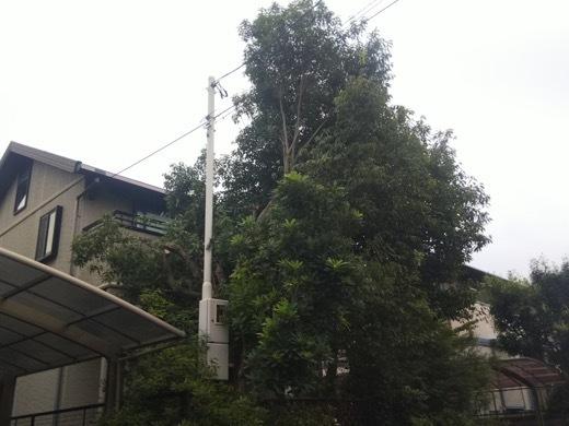 pruning-6.jpg