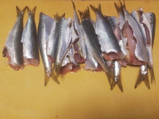 sardine-8.jpg